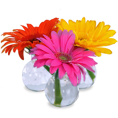 Three Gerbera Daisy Bud Vases Wkf3g Florist Delivery In Chicago